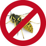 wasp forbidden