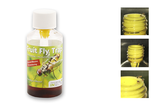 Fruitfly trap 20 ml – Insective
